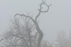 strom1_v