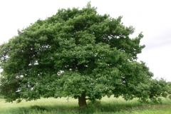 strom_v